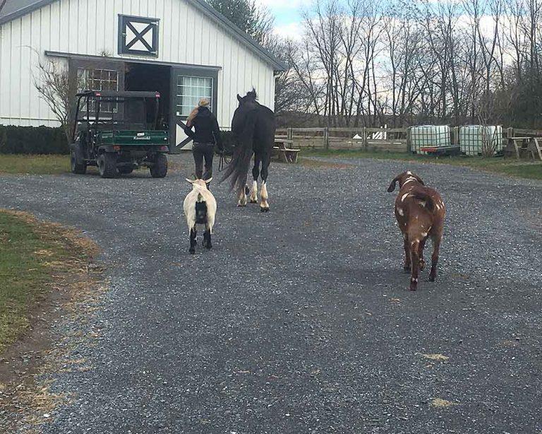 barnyard-mascots
